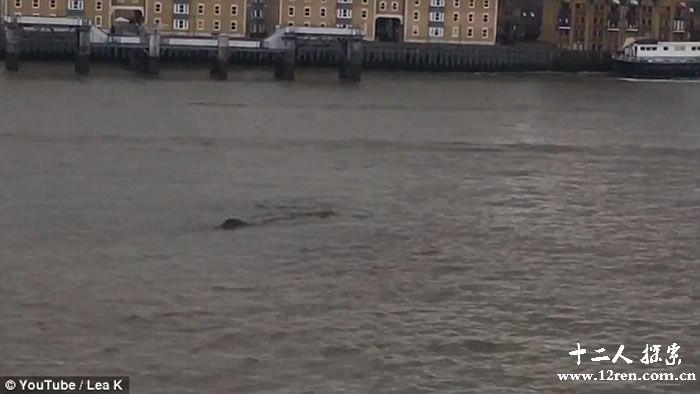 英国泰晤士河又再发现浮沉巨物 水怪之说更嚣尘上
