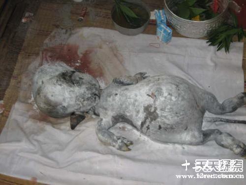 ,俄罗斯学生在UFO坠毁地发现外星人尸体