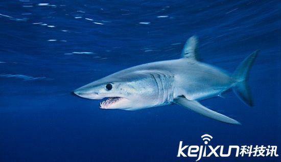 大海中的生死时速 盘点十种最快海洋动物