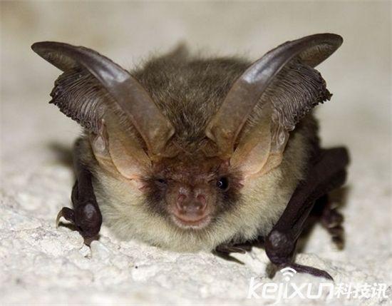 英国丑陋动物保护协会入选名单惊人!最丑长?