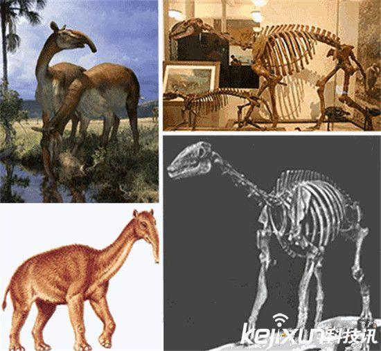 奇趣动物!14种已灭绝远古巨兽:这货竟然直立行走!