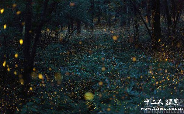 萤火虫发光是为什么