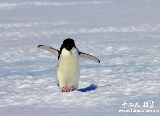 十大世界上最可爱的动物,树懒最萌小熊猫最可爱