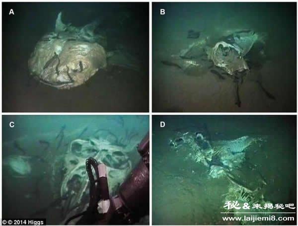 海底发现大量海洋动物尸体的水下墓地