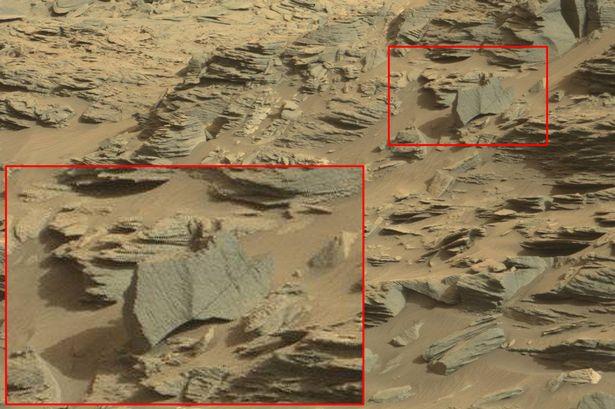 UFO每日觀察:火星上發現蝎子