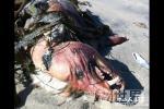 美国发现疑为吸血怪兽的神秘动物尸体【图文】