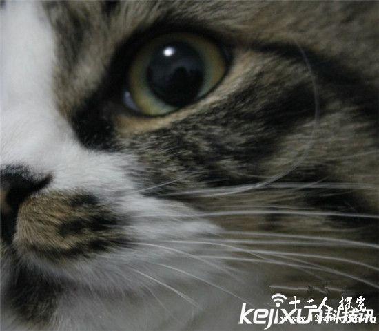 给人画可爱的猫脸