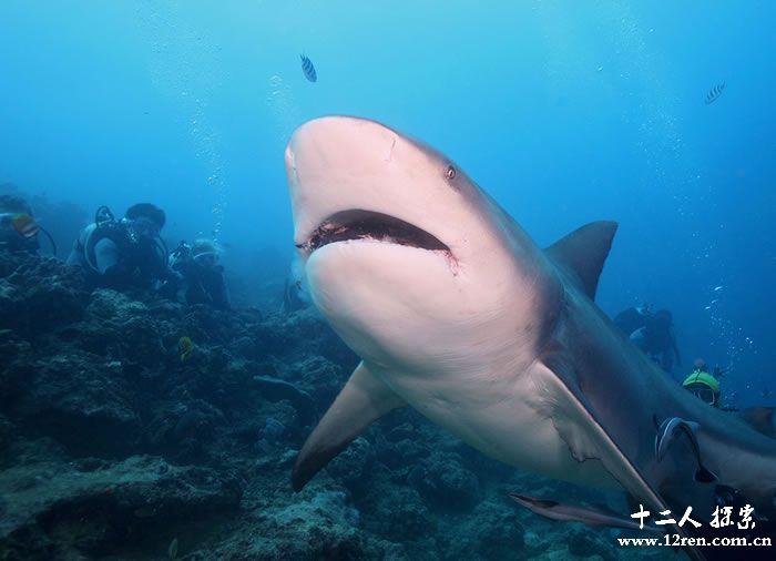 美国牙医巴哈马潜水惨遭公牛鲨咬伤