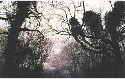 《世界十大未解之謎》之四 - 克拉彭叢林密事