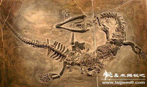 古代灭绝的动物
